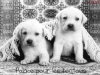 Club canin : Le palace pour les toutous