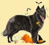 Club canin : toytoy