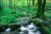 Club canin : Le ruisseau de la forêt