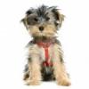 Club canin : Le p'tit coin des chiens