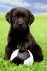 Club canin : A NOS AMIS FIDELES