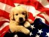 Club canin : au bonheur de vivre