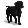 Club canin : A REBROUSSE-POIL