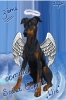 Club canin : Troisieme comme St Esprit