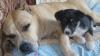 Club canin : La Droit pour tous!