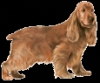 Club canin : Les chiens au paradis