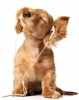 Club canin : Chez Stufy