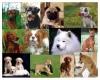 Club canin : paradi chez kolsbasd