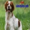 Club canin : le bien etre de nos 4 pattes