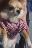 Club canin : Les Chiens Heureux =D