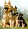 Club canin : Les B.A. D'Emeraude