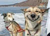 Club canin : Oh happy dogs !