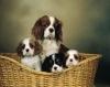 Club canin : Chez Loonablue