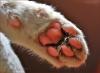 Club canin : La Patte de Velours