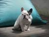 Club canin : Les chiots sont roi