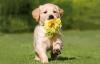 Club canin : Pour eux