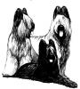 Club canin : Vos Coeurs de poils chez KTY
