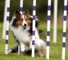 Club canin : Club des kings