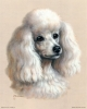 Club canin : Les Petits Frisés