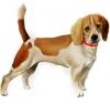 Club canin : B-Dog's Kennels