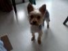 Club canin : Aux bonheur de nos amours