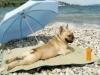 Club canin : Club Med