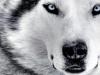 Club canin : The Kennel Club