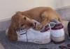 Club canin : Les loulous qui jouent