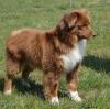 Club canin : Les berger !