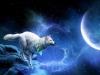 Club canin : Luz de Luna