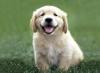 Club canin :