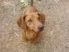Club canin : la ferme des animaux