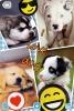 Club canin : love chien  aimer dog
