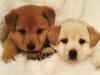Club canin : Kennel club go