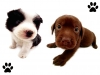 Club canin : Les Dogs Charments