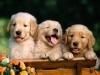 Club canin : les loulous les toutous