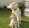 Club canin : nos_amour_de_chiens
