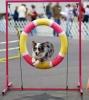 Club canin : Paradistoutou
