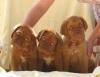 Club canin : Club du bois d'uchy