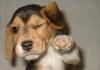 Club canin : Aux glorieux conquerants