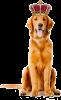 Club canin : Régal Canin