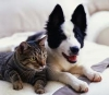 Club canin : Maxi Dogs