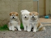 Club canin : les copains d'abords
