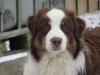 Club canin : L'orée des Charmois