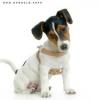Club canin : Les Jacks des Terres du Ciel