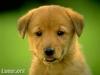 Club canin : Nos petits chouchou !!!