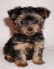 Club canin : les chien avant tous