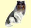 Club canin : au mimi petit toutou