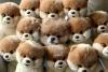 Club canin : chiens sympas