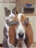 Club canin : les chien ne font pas des chats!